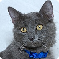 Adopt A Pet :: Forest L - Sacramento, CA