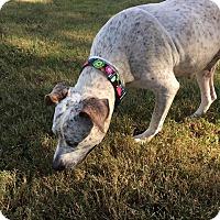 Adopt A Pet :: Kristy - Northport, AL