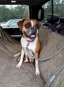 Boxer Dog for adoption in Jacksonville, Alabama - Gracie