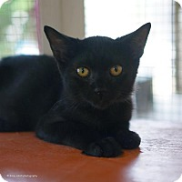 Adopt A Pet :: Egeus - Tucson, AZ