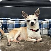 Adopt A Pet :: Papa Cody - Sheridan, IL
