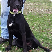 Adopt A Pet :: Jake - E. Greenwhich, RI