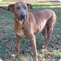 Adopt A Pet :: Zoe - Westport, CT