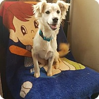 Adopt A Pet :: Sally - San Diego, CA