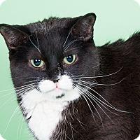 Adopt A Pet :: Remly - Wheaton, IL