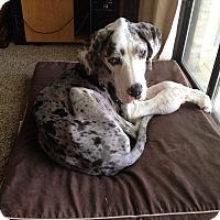 Adopt A Pet :: Sadie - Austin, TX