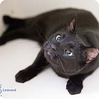 Adopt A Pet :: Leonard - Merrifield, VA