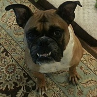 Adopt A Pet :: Buster Brown - Westminster, MD