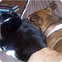 Adopt A Pet :: Sofie - Houston, TX