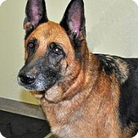 Adopt A Pet :: Jazzy - Port Washington, NY