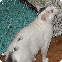 Adopt A Pet :: Loving Charmin- Defender - Scottsdale, AZ