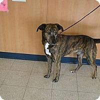 Adopt A Pet :: Duke - Ludington, MI