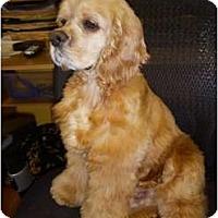 Adopt A Pet :: Josh - Tacoma, WA