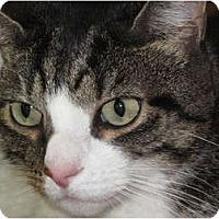 Adopt A Pet :: Newman - Port Republic, MD