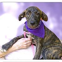 Adopt A Pet :: Rosalie beauty - Sacramento, CA