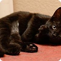 Adopt A Pet :: Corrine - North Highlands, CA