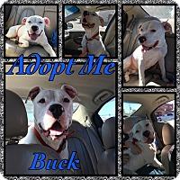 Adopt A Pet :: Buck - Cheney, KS
