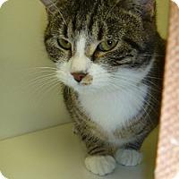 Adopt A Pet :: Amelia - Hamburg, NY