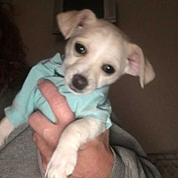 Adopt A Pet :: Grady - Calimesa, CA