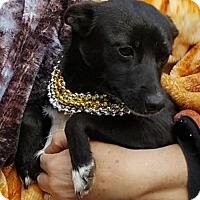 Adopt A Pet :: Juliet - Baileyton, AL