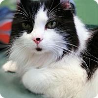 Adopt A Pet :: BOB - Franklin, TN