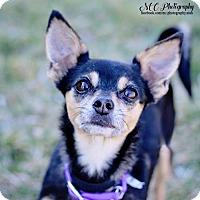 Adopt A Pet :: Akasha - Salt Lake City, UT
