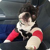 Adopt A Pet :: Hercules - Huntington Beach, CA