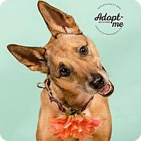 Adopt A Pet :: Marley - Cincinnati, OH