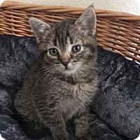 Adopt A Pet :: Maverick - Anaheim Hills, CA