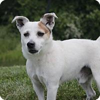 Adopt A Pet :: Wishbone A35246137 - Westampton, NJ