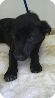 Beagle Mix Dog for adoption in Waldorf, Maryland - Vanna #403