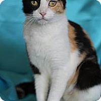 Adopt A Pet :: Eggo - Alexandria, VA