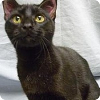 Adopt A Pet :: Oklahoma - Milwaukee, WI