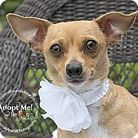 Adopt A Pet :: Maddie - Troy, OH
