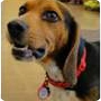 Adopt A Pet :: VIto - Beachwood, OH