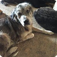 Adopt A Pet :: Hannah - Alvarado, TX