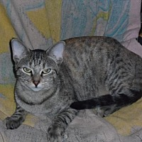 Adopt A Pet :: Abbey - Pensacola, FL