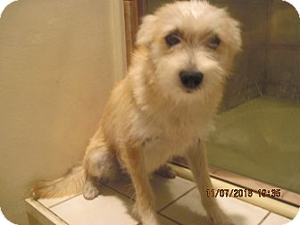 Terrier (Unknown Type, Medium)/Border Terrier Mix Dog for adoption in La Mesa, California - TITO