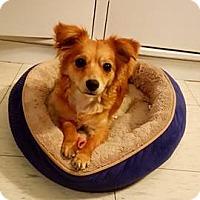 Adopt A Pet :: Sky - San Diego, CA