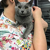 Adopt A Pet :: Leonardo - Richboro, PA