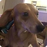 Adopt A Pet :: Bubba - Raleigh, NC