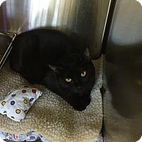 Adopt A Pet :: Godfrey - Lunenburg, MA
