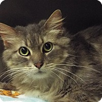 Adopt A Pet :: Dusty - Grants Pass, OR