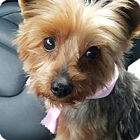 Adopt A Pet :: Hildie - House Springs, MO