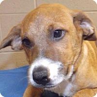 Adopt A Pet :: Lamar - Oxford, MS