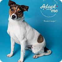 Adopt A Pet :: Santiago - New Milford, CT