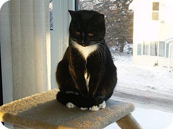 Domestic Shorthair Cat for adoption in Douglas, Ontario - Jasmine