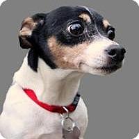 Adopt A Pet :: Ginger Snap - South Amboy, NJ