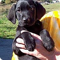 Adopt A Pet :: CHEVY - Glastonbury, CT