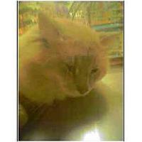 Adopt A Pet :: Camelot - Owasso, OK